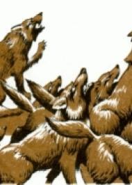 Бійка вовків із свинями
