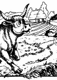 Як віл бігав наввипередки з конем